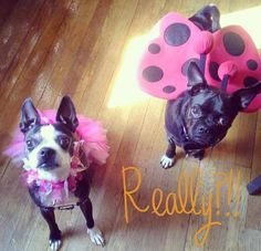 Friends of PAWS Chicago ready for Halloween fun