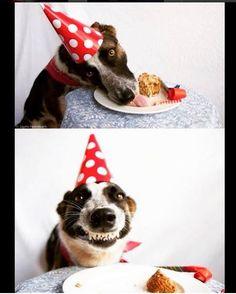 El perro de Cumpleaños