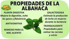 Resultado de imagen para albahaca planta medicinal