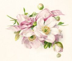 Antique Images: Free Flower Graphic: Vintage Flower Illustration with Pink Bow