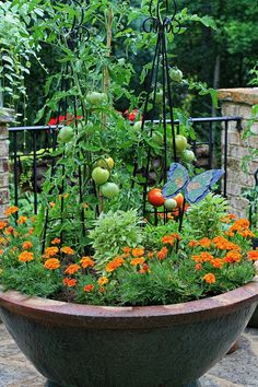 Large container planted with tomatoes, basil and marigolds all friends companion planting