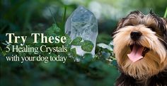 Crystals, just like herbs, flower essences, and essential oils have incredible effects on healing in the body. Try them with your dog, learn how here ...