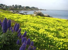 Pacific Grove and if I find a million dollars someday my first purchase will be a home here.