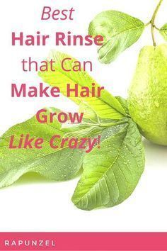GUAVA Are you losing hair? This herbal hair rinse can be one of the best solutions that you've been looking for! Severe hair loss can be one of the most frightening t