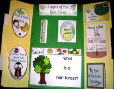 *FREE* Rain Forest Unit and Lapbook