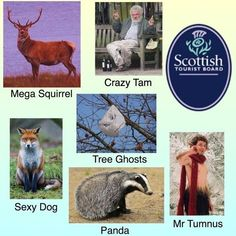 This handy guide to Scotland's wildlife.   27 Scottish Pictures That Will Make You Laugh For Once In Your Life