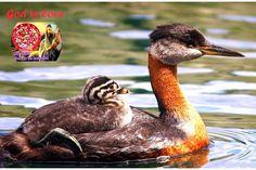 New slideshow: Jesus Unconditional Love 24/7/2014