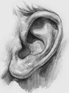 Kulaklarımız ve burnumuz hayatımızın sonuna kadar büyümeye devam ediyor