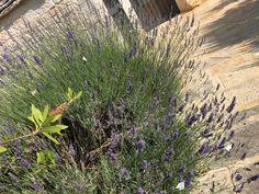 Italian beauties.... Alberobello - Trulli paparale