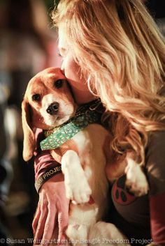 The Beagle Freedom Project – sometimes it is the only chance that a beagle has to live.