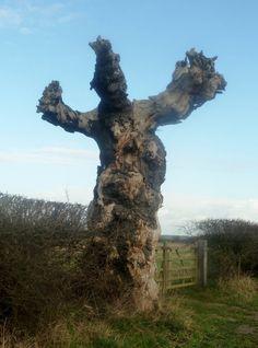 I AM A TREE!!