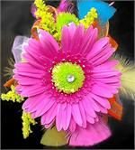 Dill's Perfectly Pink Neon Gerbera Daisy Wrist Corsage - This corsage is a SHOWSTOPPER! An electric pink gerber daisy is paired with lime green button mums, yellow solidago, jewels, and ribbons and feathers in hot neon colors. It's a rainbow of gorgeous bright hues!!