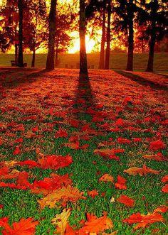 Forest Sunrise - Mannhein, Germany