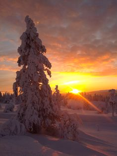 I hope you were here. Levi, lapland