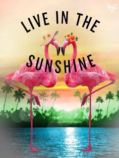 Live in the Sunshine Flamingo Decor, Pink Flamingos, Flamingo Beach, Flamingo Pictures, I Need Vitamin Sea, Beach Please, Pink Bird, Beach Quotes, My Happy Place