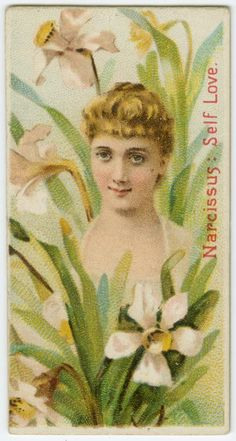 Narcissus - 'Self Love' in the Victorian Language of Flowers.
