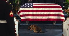 """This trailer is for """"Max"""" -- a family movie based on a true story about a military hero dog who struggles with post-traumatic stress after serving in Afghanistan and losing his Military handler in battle."""