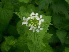 Formal Gardens, Healing Herbs, Herbal Medicine, Ikebana, Permaculture, Natural Remedies, Healthy Life, Herbalism, Nature
