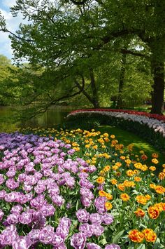 Keukenhof is a beautiful and easy day trip in the Netherlands. This post has everything you need to visit Keukenhof in plus beautiful tulip pictures. Tulip Fields Netherlands, Couples Vacation, Vacation Ideas, Spring Break Trips, Top Travel Destinations, Unique Photo, Beautiful Gardens, Beautiful Pictures, Beautiful Scenery