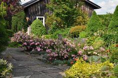 Three Dogs in a Garden: A Romantic Country Garden
