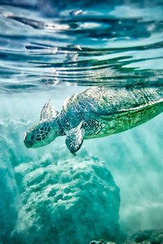 sea turtle defffff think im gonna get a sea turtle n sea horse tattooed on me next