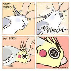 Funny Cartoon Memes, Cute Memes, Funny Animal Memes, Cute Funny Animals, Cute Baby Animals, Funny Cute, Funny Birds, Cute Birds, Cute Animal Drawings
