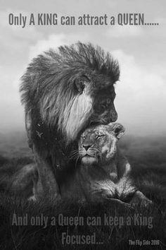 Your lion - Funny Animals Couple Lion, Beautiful Creatures, Animals Beautiful, Fotografia Pb, Animals And Pets, Cute Animals, Wild Animals, Animals Photos, Black Animals