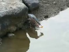 Just a bird. Using a bread as a bait to catch fishes.