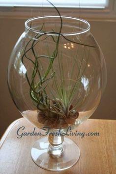 air plant terrarium #terrarium #houseplant by rachel..54
