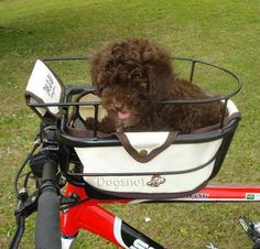 Dog Bike Bag