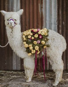 Floral baby alpaca wedding | wedding | | wedding photography ideas | | fury friends | | wedding photography | | Wedding pets | #wedding #weddingphotography https://www.roughluxejewelry.com/