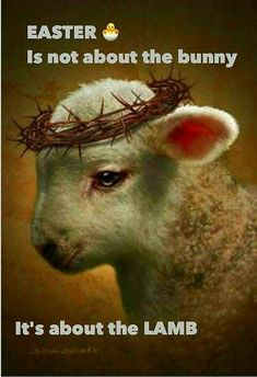Oh Lamb of God, Sweet Lamb of God, I love the Holy Lamb of God. Oh wash me in your precious blood. My Jesus Christ, the Lamb of God. Lion And Lamb, Prophetic Art, Lion Of Judah, Jesus Pictures, Lamb Pictures, Religious Pictures, Bible Pictures, Jesus Is Lord, Jesus Prayer