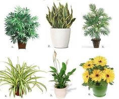 Top 10 Air Purifying House Plants