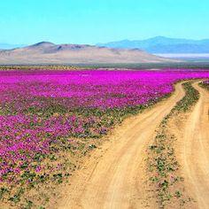 Atacama Desert. Go to Chile