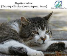 Il gatto anziano, quando il gatto diventa anziano cosa fare se il gatto anziano non mangia quando il gatto dorme sempre, quando beve molto e miagola forte
