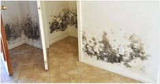 How to Combat Mold in a Flooded House Before you rebuild or restore your water-damaged home, take these steps to keep mold at bay by Gold Coast Flood Restorations Diy Mold Remover, Mold Removal, Home Renovation, Flood Restoration, Flooded House, Get Rid Of Mold, Remove Mold, Berber Carpet, Diy Molding