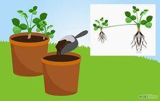 7 Maneras de cultivar Fresas Las fresas cultivadas en casa están llenas de sabor y de frescura. Pueden servir como alimento o como planta decorativa y son perfectas para ser cultivadas en el jardín o en contenedores. Si tienes niños, verán que las fresas son muy fáciles de cultivar y que es una planta muy …