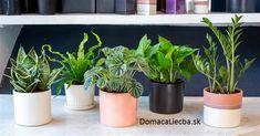 We shared our favorite low-maintenance houseplants with The TODAY Show (L to R: Snake Plant, Bird's Nest Fern, Ripple Peperomia, Pothos Plant, ZZ Plant) Indoor Plants Low Light, Indoor Planters, Plants Indoor, Indoor Outdoor, Ceramic Planters, Outdoor Plants, Low Maintenance Landscaping, Low Maintenance Plants, Plante Pothos