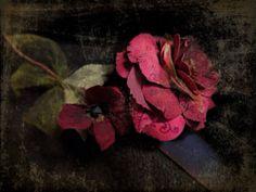 Paper rose, rose en papier By Missclara