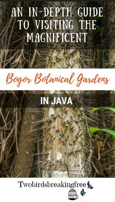 An In-Depth Guide To Visiting The Bogor Botanical Gardens In Java - Twobirdsbreakingfree Active Volcano, Bogor, Archipelago, Plan Your Trip, Botany, Botanical Gardens, Travel Guides, Need To Know, Places To Visit