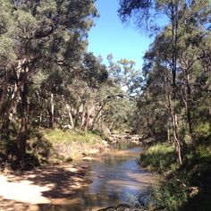 The drip at Goulburn River