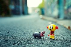 HI - I told you i don't want a pet - hippo, street photography, macro, toy photography, toy, cute, urban vinyl, pet, street, urban