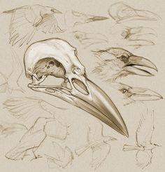 crow anatomy - Pesquisa Google
