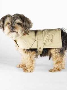 Doggy trench coat! look Paulie...for Rummy in the rain!!!