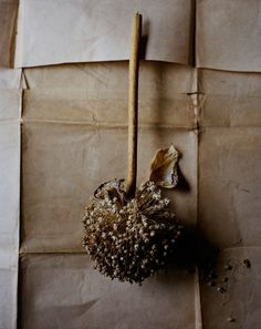Edge Reps Ditte Isager Still Life Seed Pods, Still Life Photography, Wabi Sabi, Earth Tones, Botany, Dried Flowers, Glamour, Earthy, Flower Power