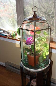 Trash to Treasure terrarium