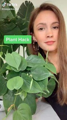 House Plants Decor, Plant Decor, Garden Plants, Easy House Plants, Hanging Plants, Indoor Plants, Household Plants, Decoration Plante, Inside Plants