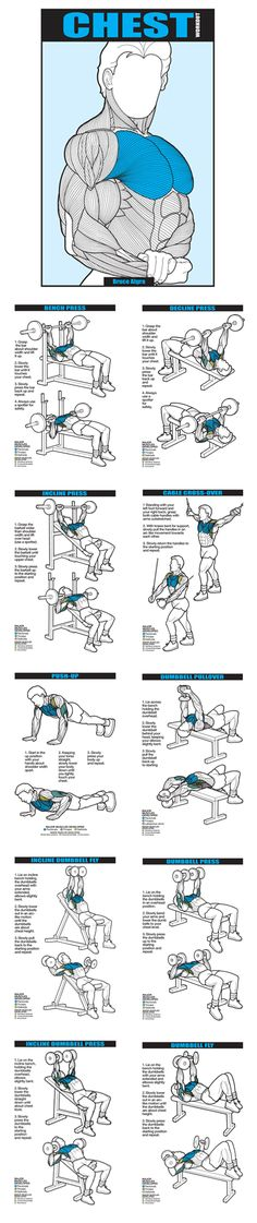 Algra Co-Ed Series Chest Workout Booklet