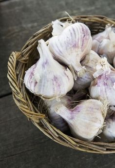 Garlic goes after bad inflammation causing bacterias while leaving good bactera intact, rich in inulin the fiber that helps the body digest food efficiently/steadies blood sugar.