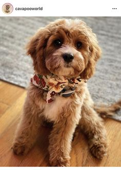 Friend 2, Mans Best Friend, Best Friends, Cavapoo, Maltipoo, Cute Funny Animals, Dog Mom, Fur Babies, Dogs And Puppies